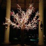 beautiful tree at entry to Las Ventanas