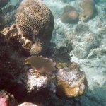 Corales en West End