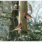 Bird Feeder from Dining Room Window