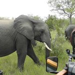 Elephant up close and personal