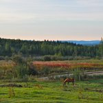 View of the natural Alaskan Fireweed meadow from the B & B