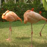 Flamingo's in grounds