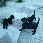 PUPPYS AT PLAY