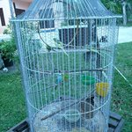 ANA'S BIRDS
