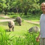 Rhinos in my backyard