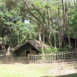 Rewa's Village