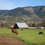 Beautiful winery/ranch