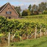 Halfpenny Green Vineyards