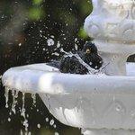Birdbath in gardens