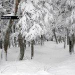 Patsy's glades on Snowdon