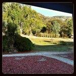 Studio chalet 5 veranda view. Kangaroos. Peaks behind tree line.