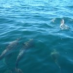 dolphins around our boat