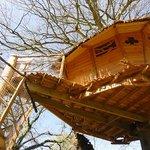 Cabane Gunnéra au printemps