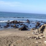 View of beach and Elephant Seals