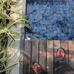 side pools