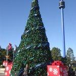 Seaworld Christmas Tree