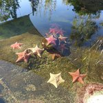 Starfish Pool