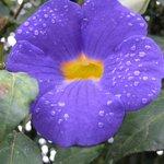 Beautiful plant life