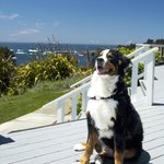 Pet-Friendly Lodging on the Mendocino Coast