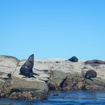 Seals basking on the rocks