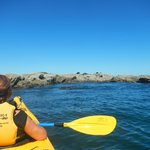 Paddling up to the seals