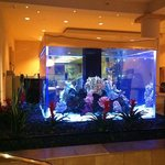 fish tank at night