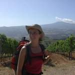 Wineyards in Montalcino