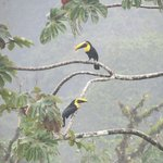 Toucans in tree in front of our room