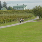 We offer free tours daily (*weather permitting) through the vineyard and winemkaing facility