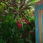 Entering through tropical gardens