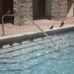 piscina con visitantes