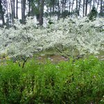 Spring at Oyster River
