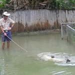 Taking your croc for a swim