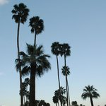 Towering palms above property