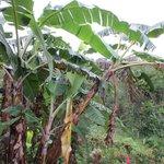 Ceibatree