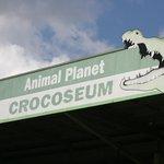 crocoseum arena