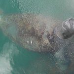 I woke up in the morning to a friendly manatee playing in the water behind my room.