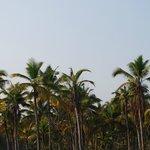 Serene Backwaters