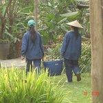 las jardineras