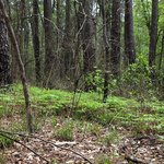 Huntsville State Park - Chinquapin Trail