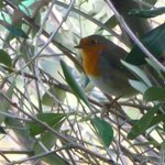 European robin, one of many nice birds around the grounds