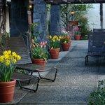 Arbor tulips