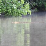 Foto de Tres Chimbadas Lake
