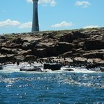 Lighthouse and sea lions.