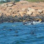 Plenty of sea lions.