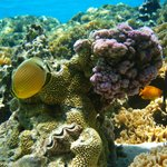 a beautiful coral world