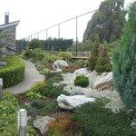Steve's beautiful garden
