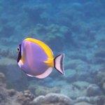un poisson parmi d'autres à 50 cm de profondeur