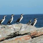 Birdlife at Seal Point