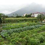 vegetable farm around Errantry